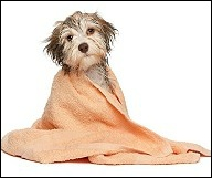 Free Dog Grooming Courses Liverpool